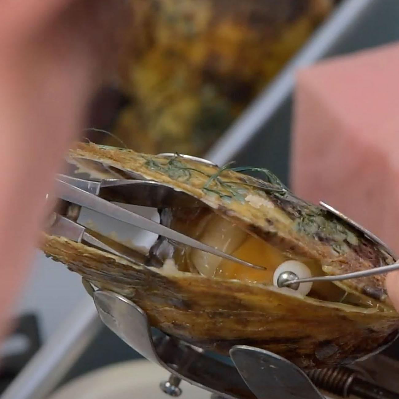三重県真珠振興協議会|真珠ができるまで5