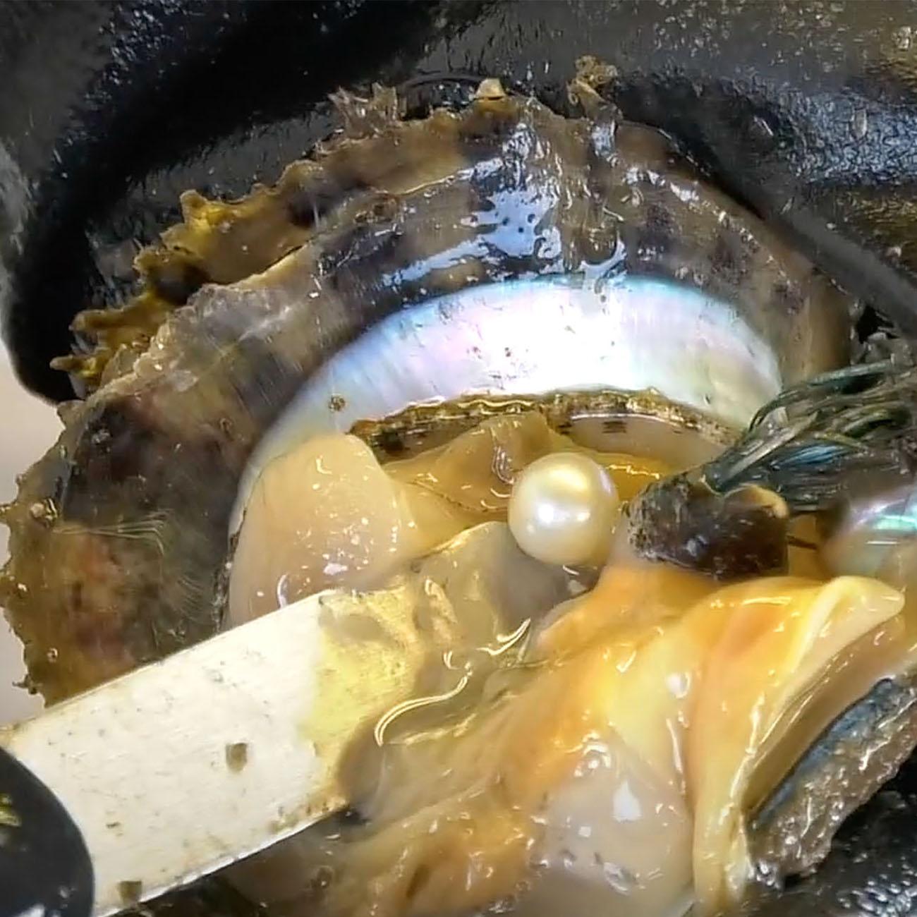三重県真珠振興協議会|真珠ができるまで7